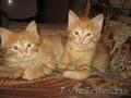 милые- рыжие котики
