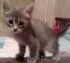 Красивый котенок в добрые руки