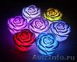 красивая неоновая роза
