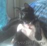 Котята мы милые и хорошие и ждем хозяин лишь тебя!!!