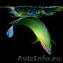 Комплексная чистка и обслуживание аквариума Казань