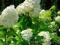 Декоративные цветы,  деревья,  кустарники