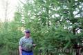 саженцы  лиственницы сибирской