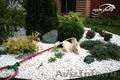 Посадка растений,  устройство альпийской горки,  рокария,  каменистого сада