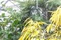 Растения для сада и оранжереи